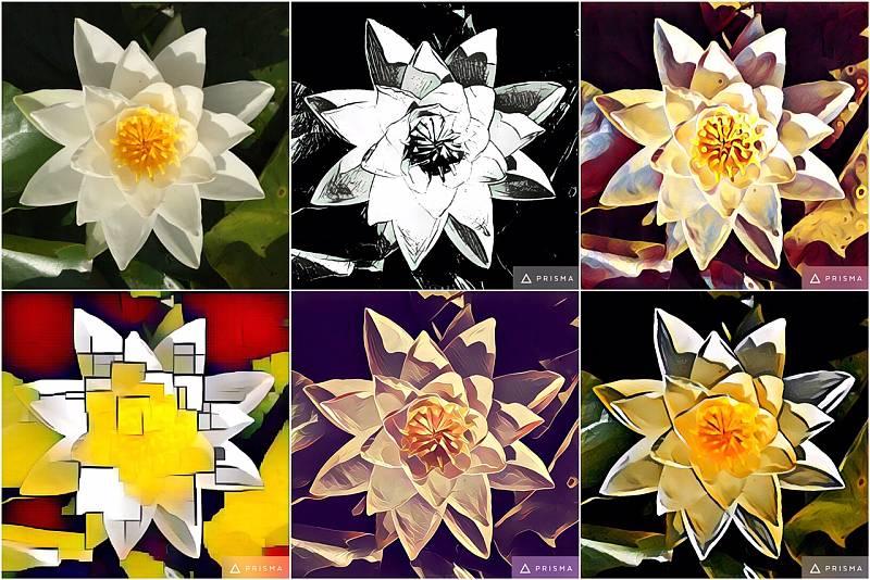 Beispiel der Prisma-Filter: Oben links mein Original-Foto, daneben 5 Kunst-Filter der App.
